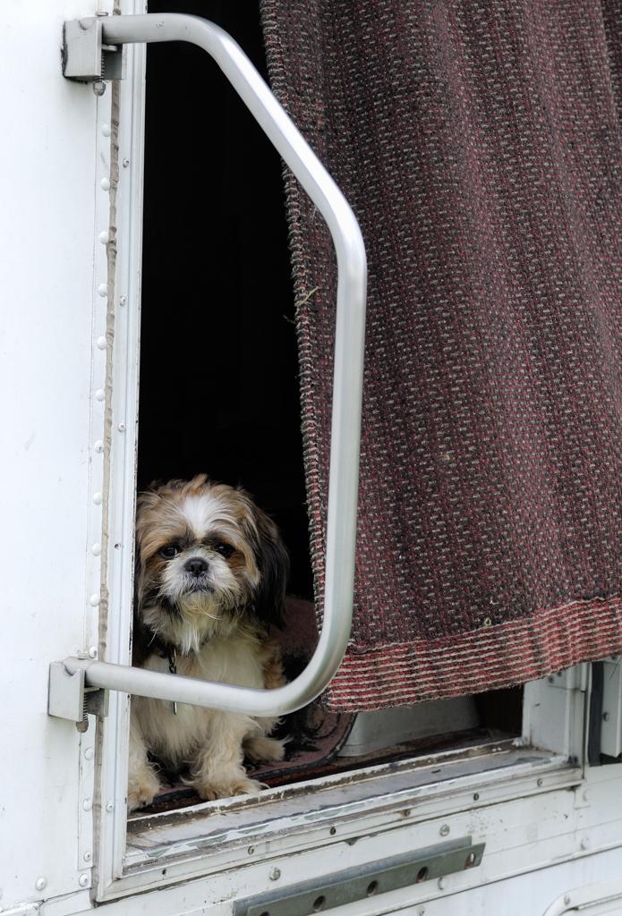 Carnival Dog (1 of 1)