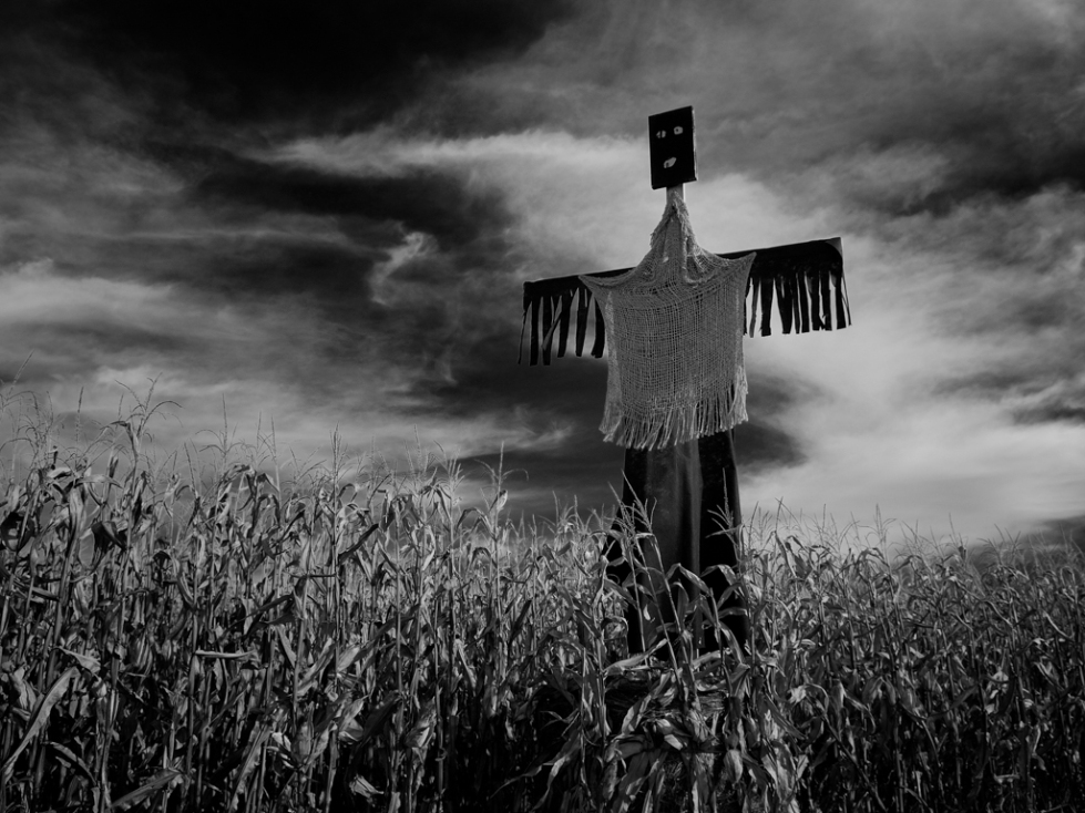 Cornfield Scarecrow (Portersville, PA)